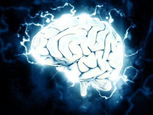 Il sistema nervoso e i neuroni