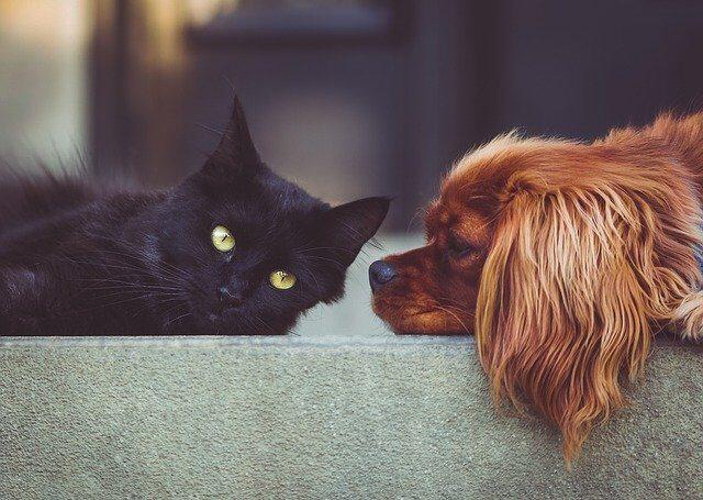 Animali domestici e salute del cuore: una ricerca recente