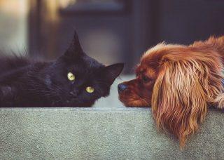 Animali domestici.