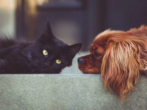 Animali domestici e salute del cuore