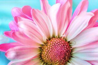 fiore e natura.