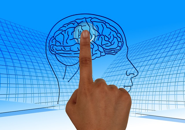 brain 770044 640