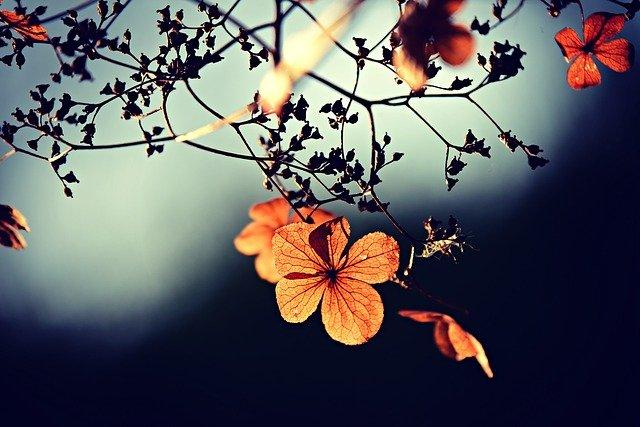 flowers 3876195 640