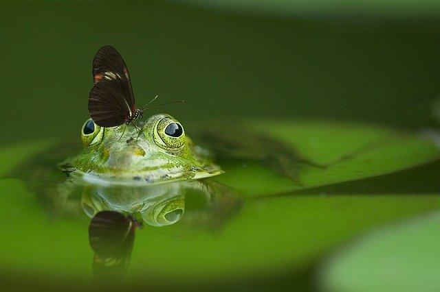 frog 540812 640