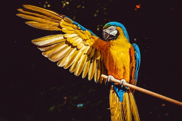 parrot 3601194 640