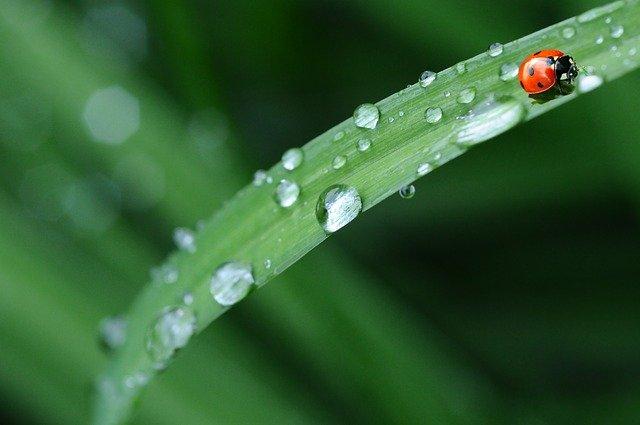 raindrops 574971 640